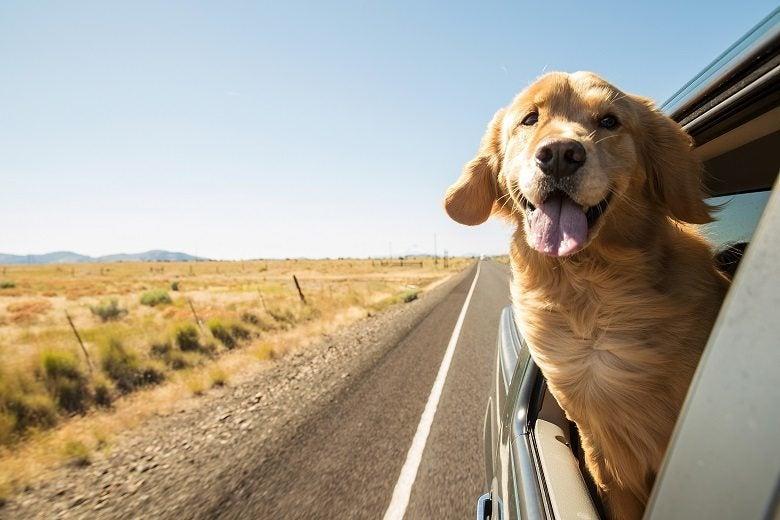 Pet Travel Services-f57474fd